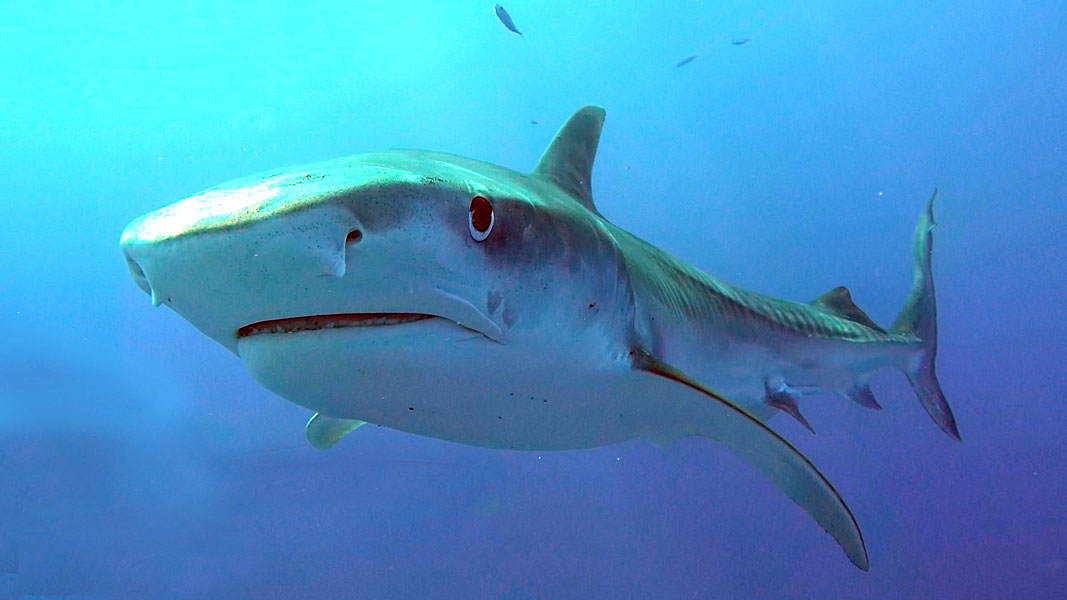 ikan terbesar di dunia