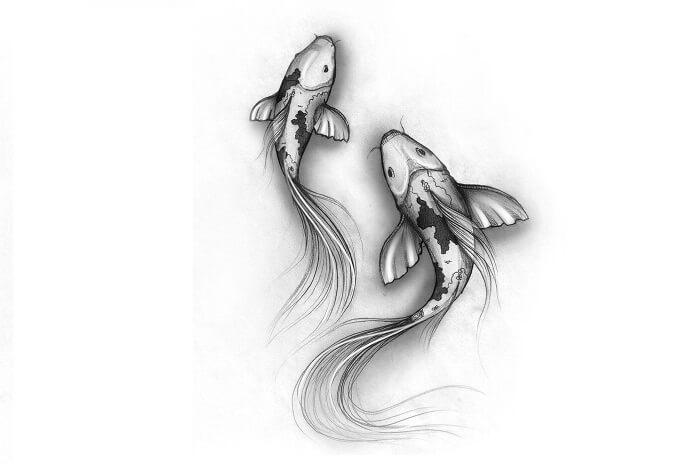 gambar sketsa ikan koi