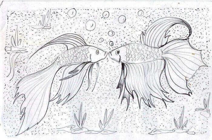 gambar sketsa ikan cupang