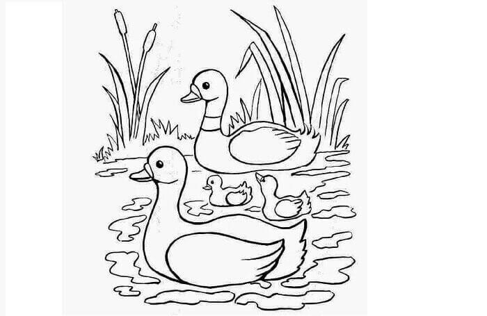 gambar sketsa hewan peliharaan