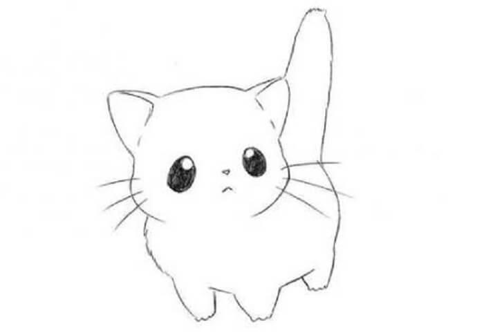 gambar sketsa hewan kucing