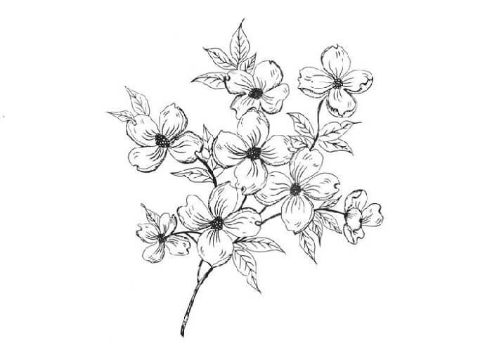 sketsa bunga