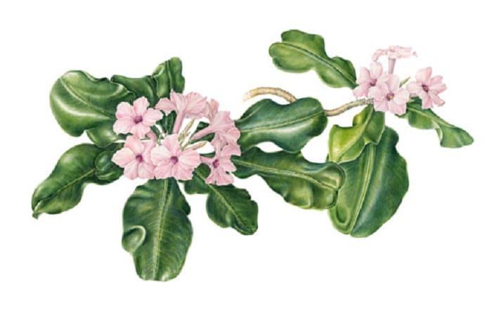 gambar flora