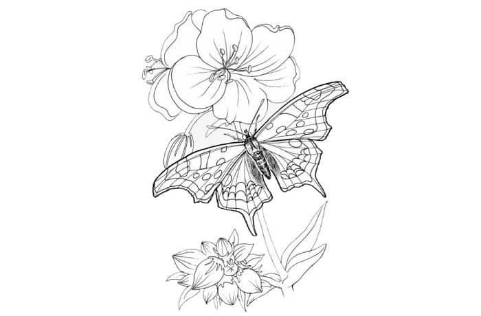 sketsa gambar flora dan fauna