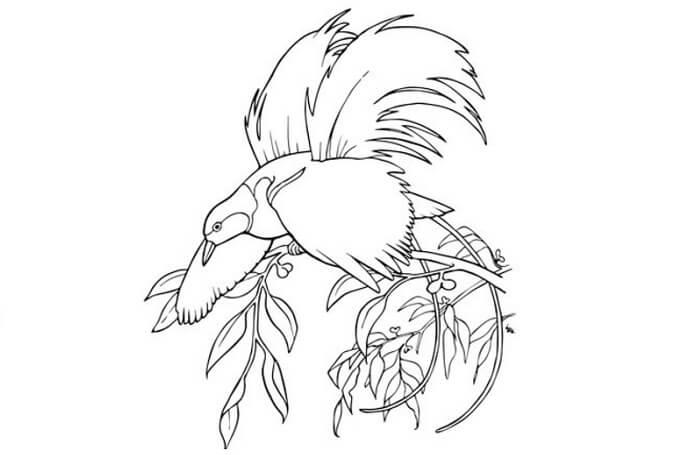 sketsa burung